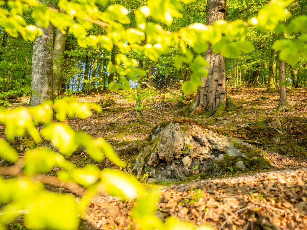 Del av skog på fastigheten
