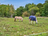 Två av 14 hästar